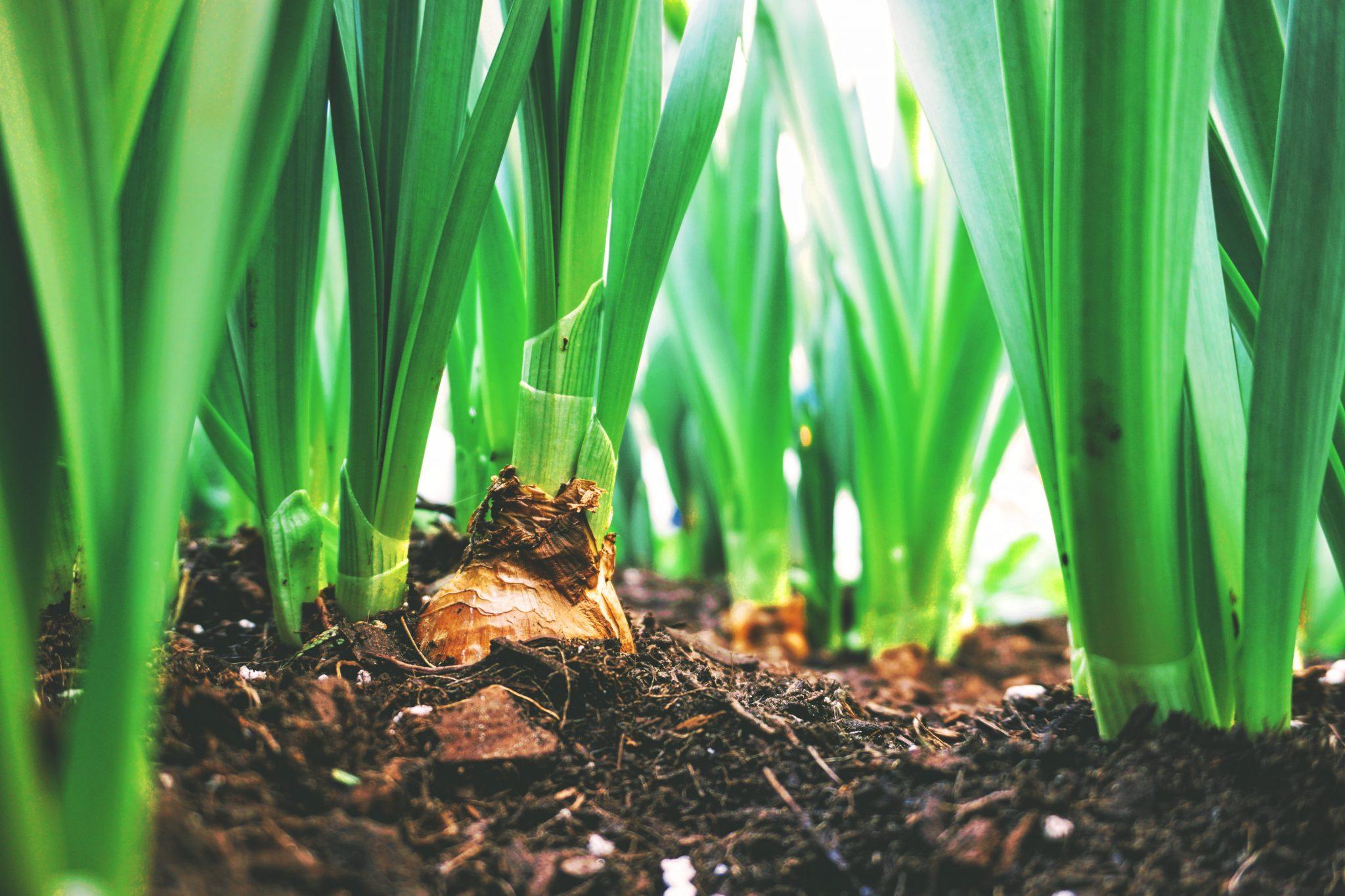 Compost Jardinería Santander Valladolid