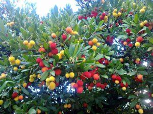 Jardinería Santander