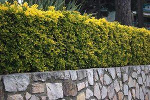 Jardinería Santander Cantabria Valladolid